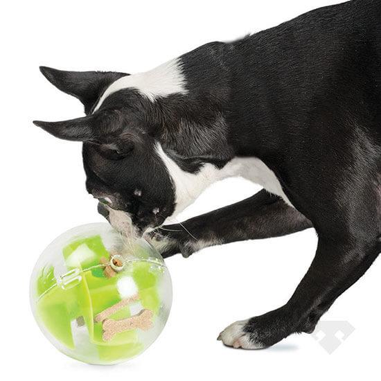 A Maze Ball Dog Toy